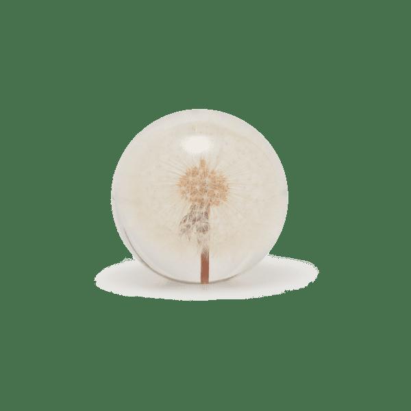Briefbeschwerer Pusteblume - PUTIH